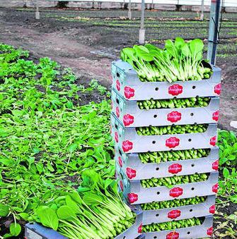 Crisis de reputación en el sector agro: el caso de las lechugas murcianas 3