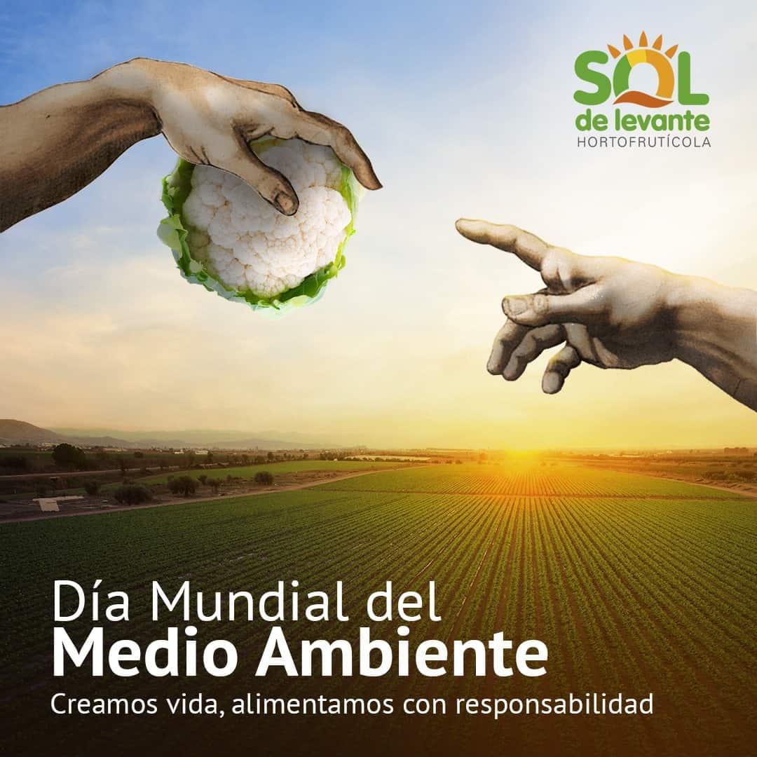 Comunicación, web y estrategia | Sol de Levante 11