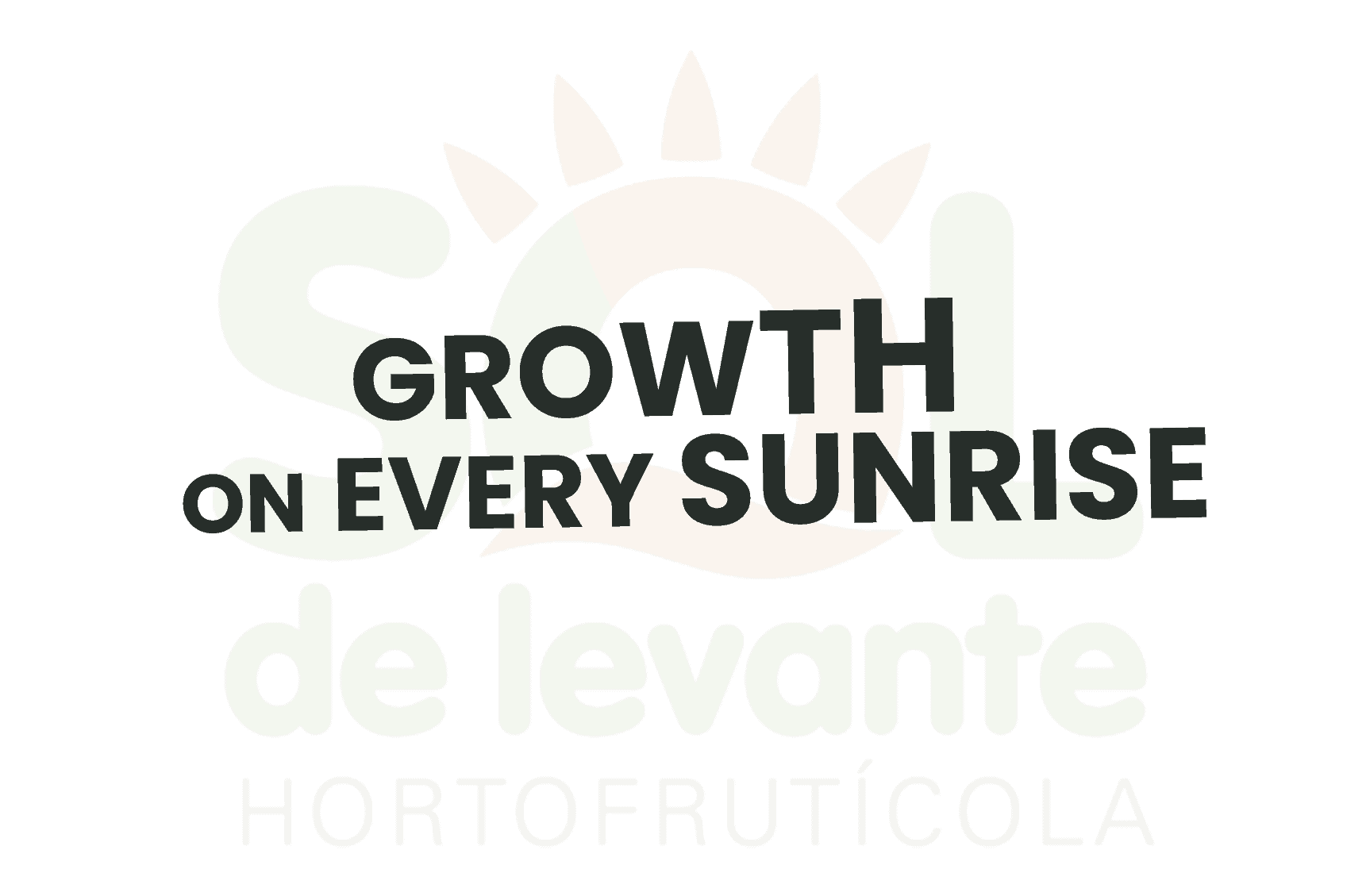 Comunicación, web y estrategia | Sol de Levante 1